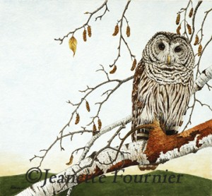 Barred_Owl_And_Birch_Trees
