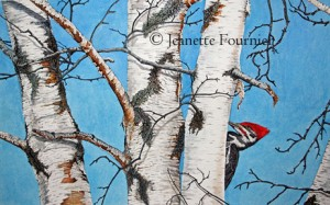 pileated woodpecker painting