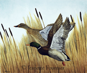 mallard ducks in flight painting