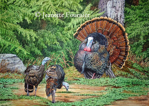wild turkey art
