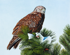 Red-tail Hawk painting