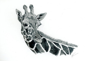 Giraffe graphite sketch
