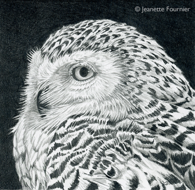 Untitled- SnowyOwl